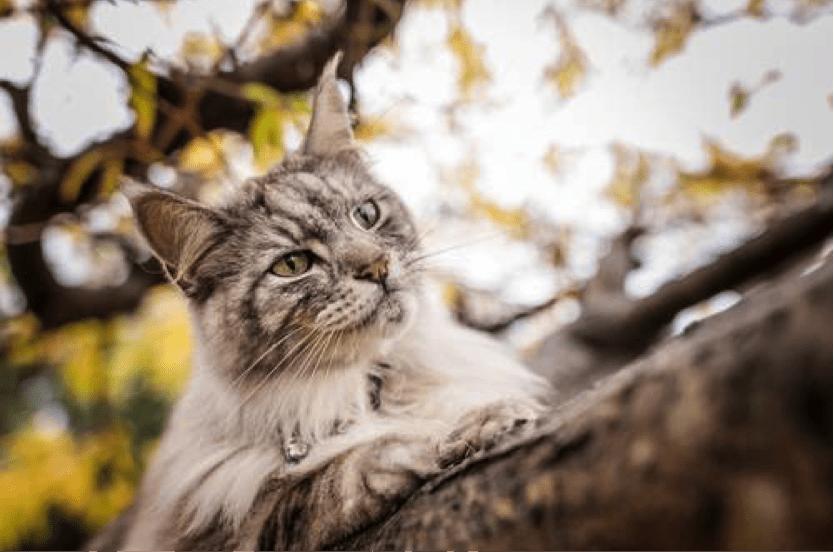 猫に寄生するダニの種類・症状・原因とは?マダニ駆除の決定版をご紹介!