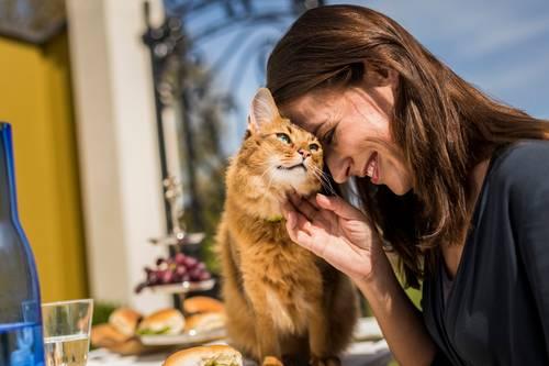 猫がゴロゴロと喉を鳴らす本当の意味とは?ゴロゴロ音を発する仕組み・理由・効果について