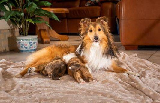 犬のしゃっくりが止まらない!しゃっくりの止め方や頻度が多い場合の対処方法や病気について