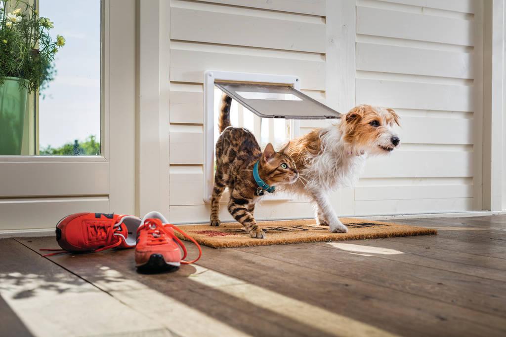 犬の口臭が気になる!犬の口が臭い場合のケア方法・対策改善の方法とは?