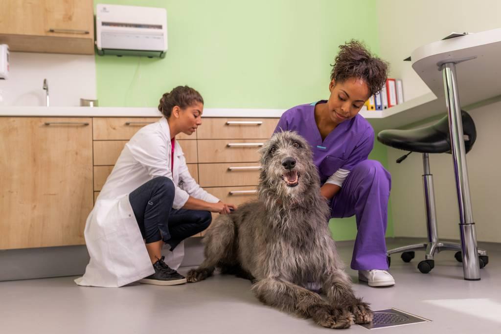 犬の皮膚につく黒いカスとは?原因・対処方法などを詳しくご紹介