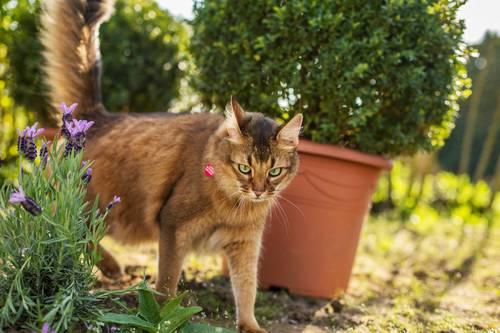 猫はなぜ「またたび」に興奮するのか?気になる効果や与え方の注意点とは