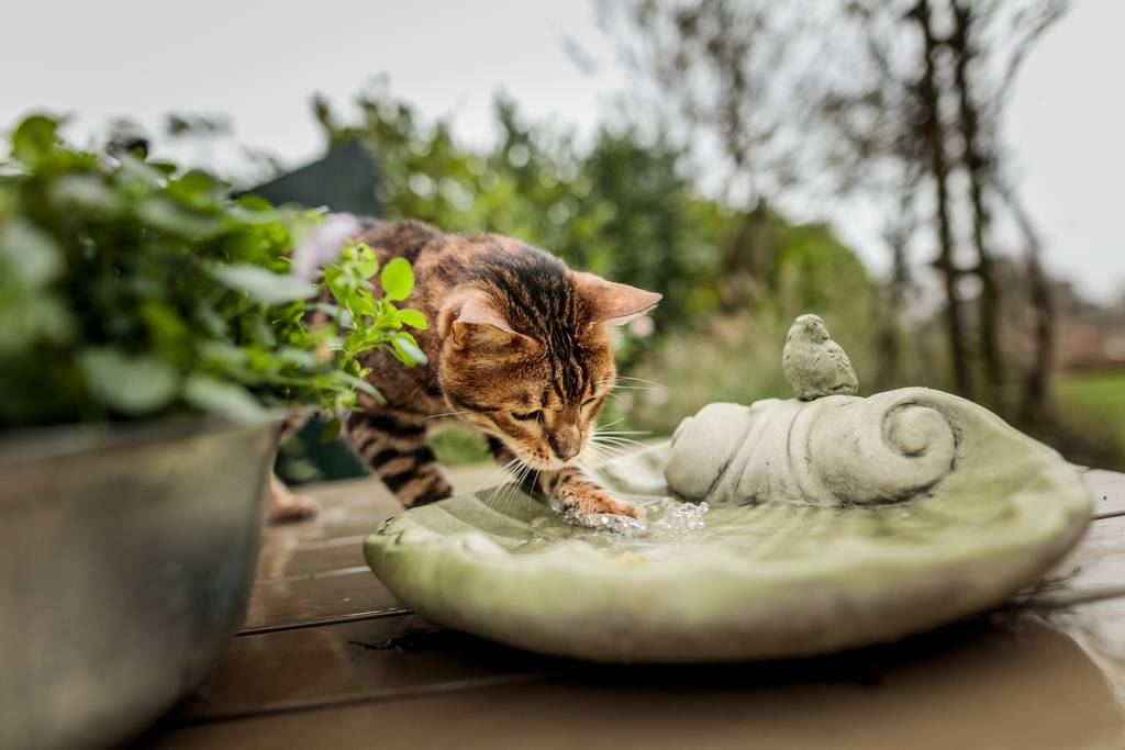 猫の下痢・便秘の症状とは?原因や治療・対策方法について解説
