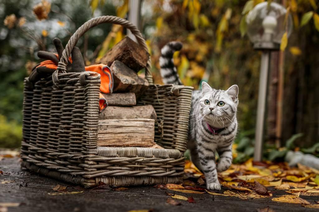 猫にノミがいるか調べる方法とは?ノミがいた場合の駆除方法などについても解説