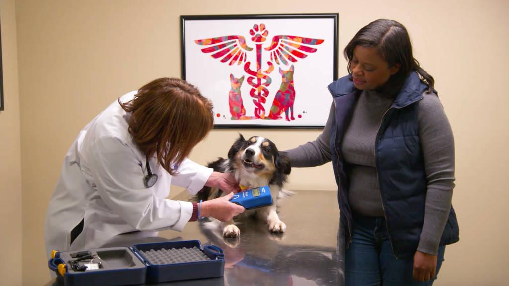 犬のノミダニ対策の薬に副作用はある?ノミダニ駆除薬は動物病院で処方を受けよう
