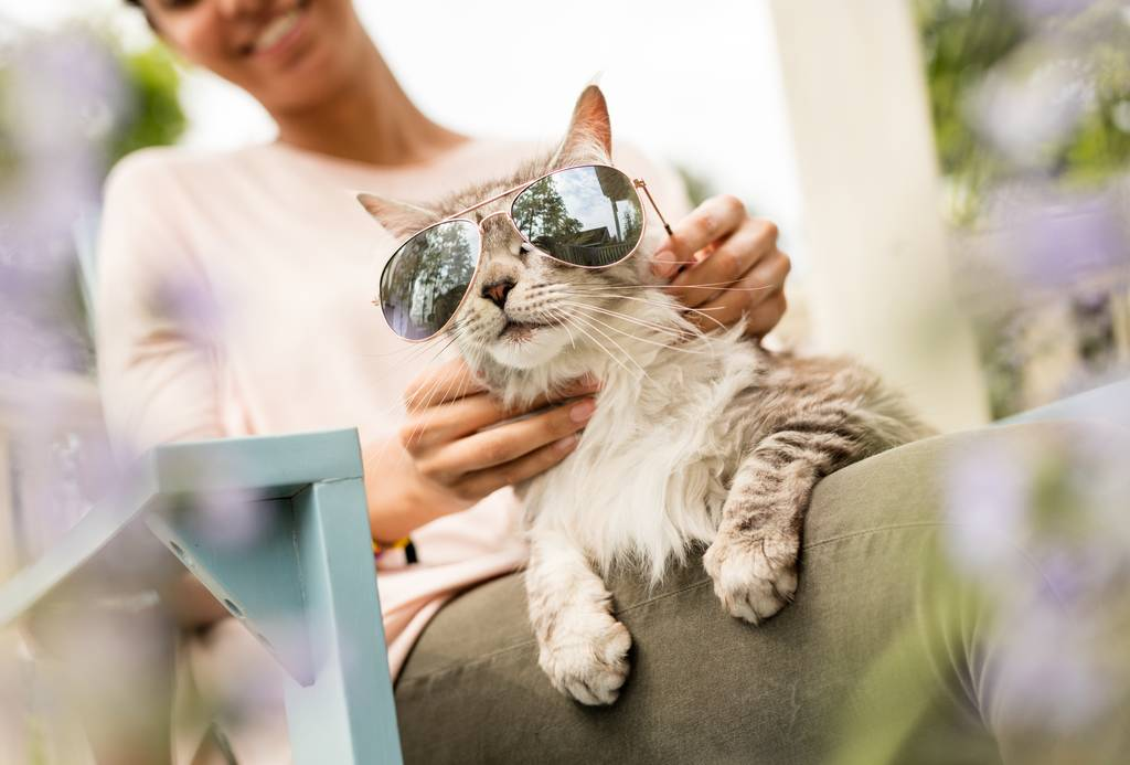 しぐさや行動でわかる?猫の気持ちを読み解く方法を徹底解説
