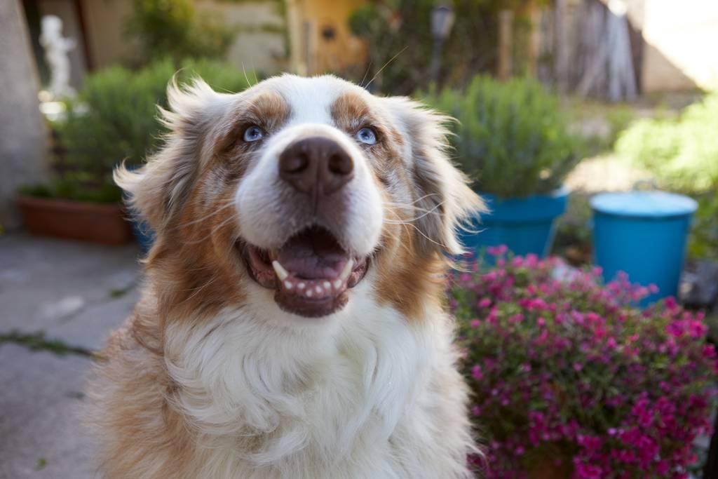 犬がご飯を食べない時の対処方法とは?理由や病気の可能性について